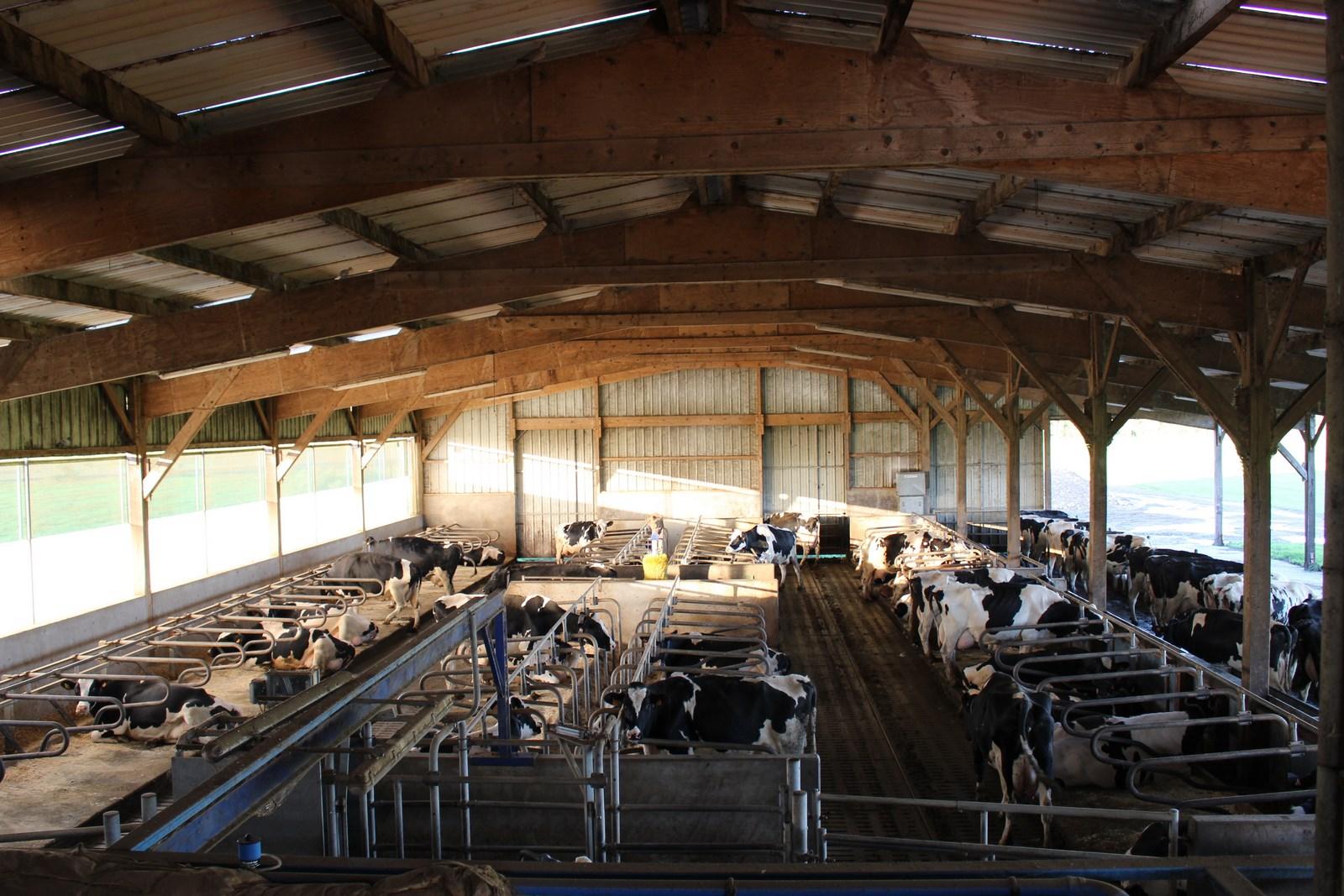 Stabulation vaches laitière intérieur